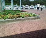 高速道の花.jpg